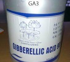 chat -tang -truong -GA3-Gibberellin hoachathinghiemconkho-com